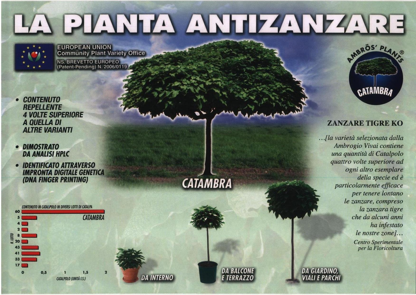 Catambra, la pianta antizanzare! - Blog Vivaio Di Bert