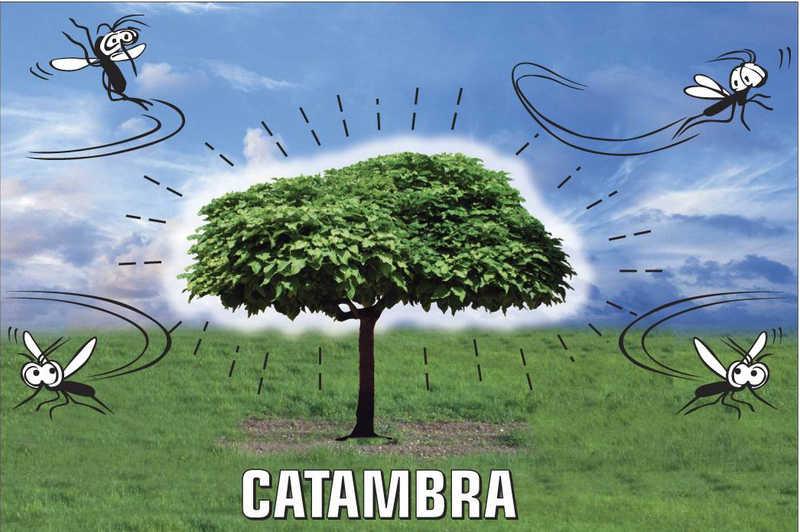 Catambra