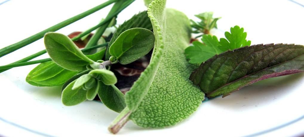 Erbe Aromatiche, profumi inebrianti, sapori deliziosi…