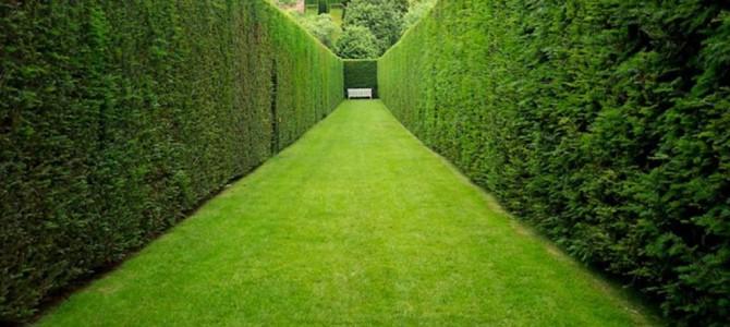 Piante da siepe: quali scegliere per il tuo giardino?